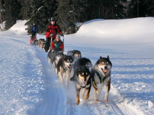 dog-mushing-winterlake-lodge-1