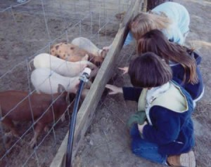 kids-with-piglets-265-dpi
